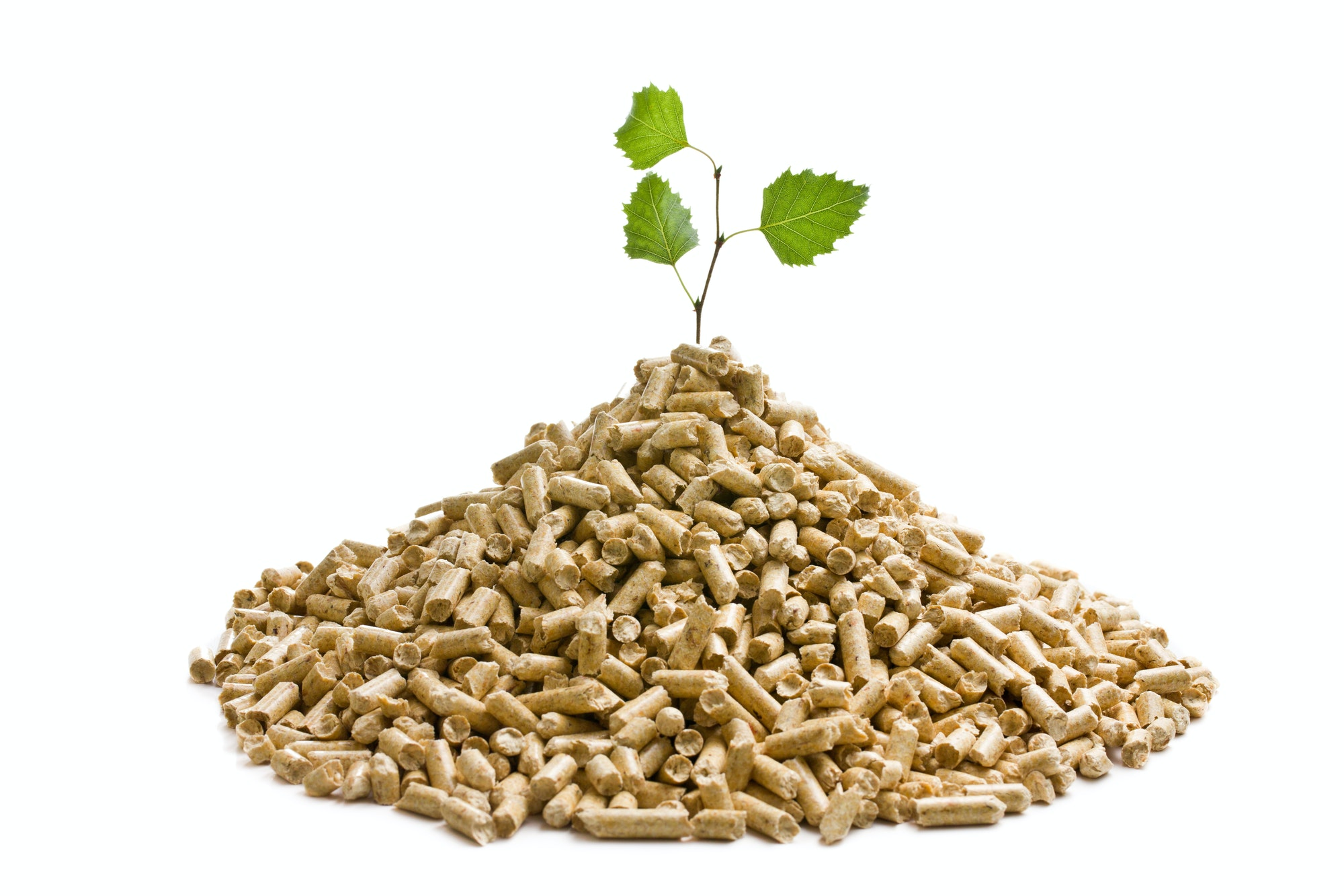 the wooden pellets